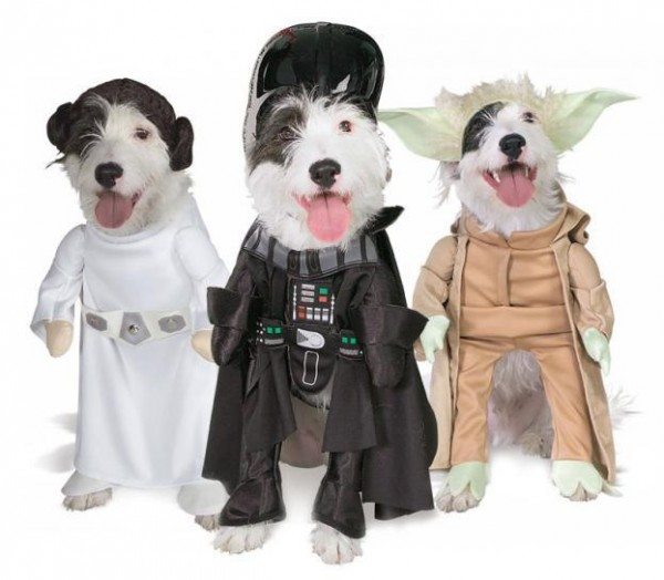 costume-chien-600x524